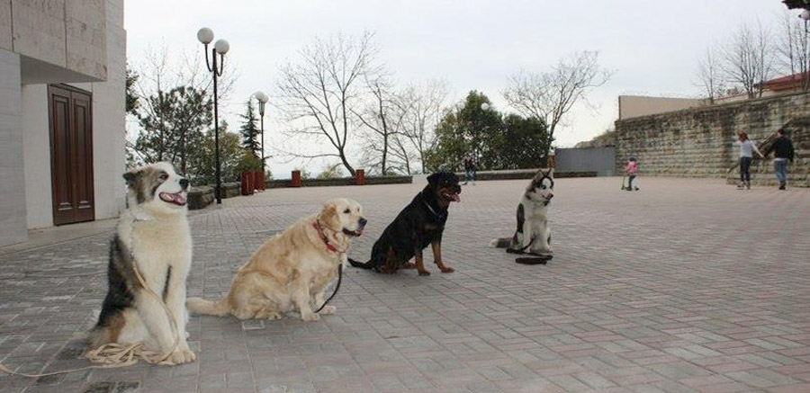 дрессировка собак в сочи